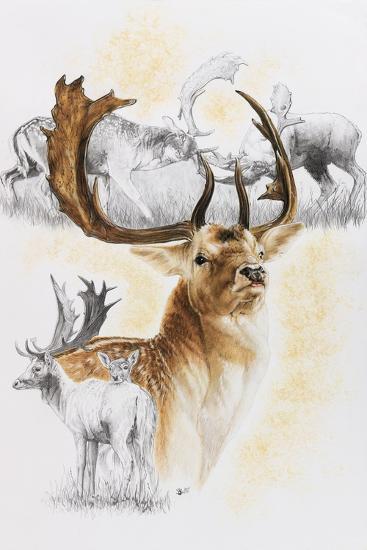 Fallow Deer-Barbara Keith-Giclee Print