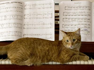 Family Cat Rests on a Piano Keyboard Beneath Sheet Music-Charles Kogod-Photographic Print