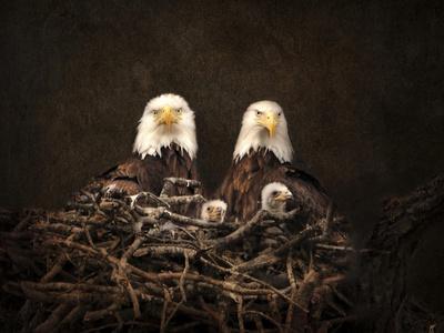 https://imgc.artprintimages.com/img/print/family-is-forever-bald-eagles_u-l-pu0m480.jpg?p=0