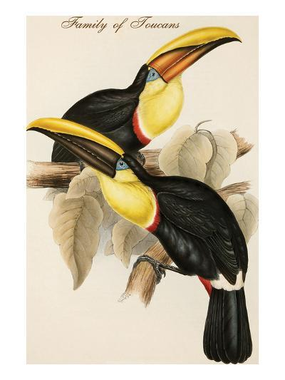 Family of Toucans-John Gould-Art Print