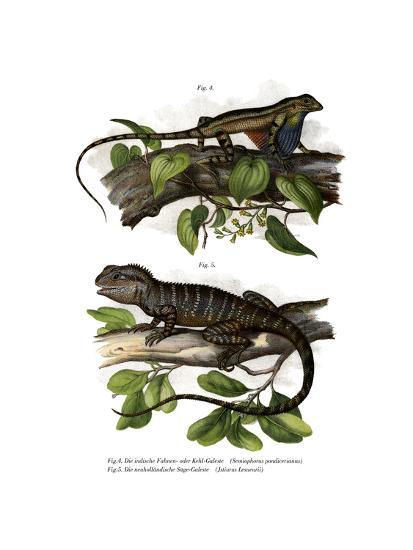 Fan-Throated Lizard--Giclee Print