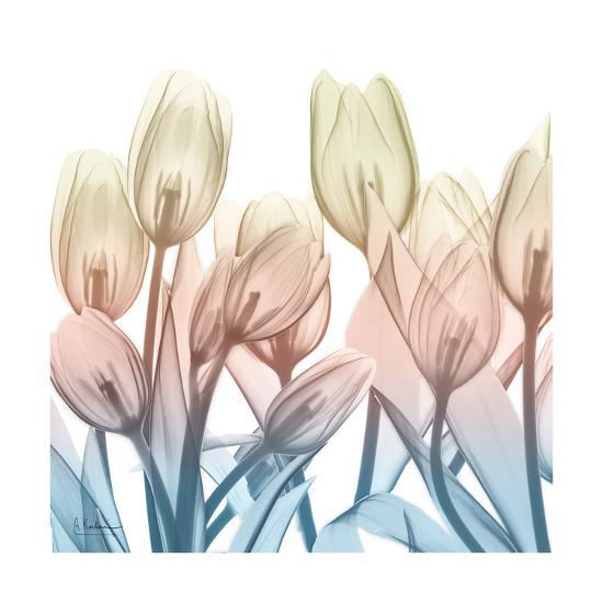 Fantastic Bloom-Albert Koetsier-Art Print