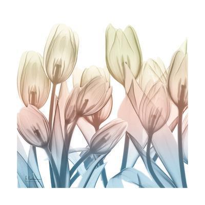 https://imgc.artprintimages.com/img/print/fantastic-bloom_u-l-f8iwsk0.jpg?p=0