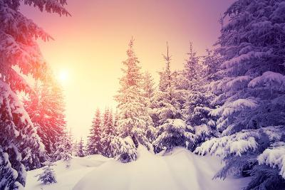 Fantastic Landscape Glowing by Sunlight. Dramatic Wintry Scene. Natural Park. Carpathian, Ukraine,-Creative Travel Projects-Photographic Print