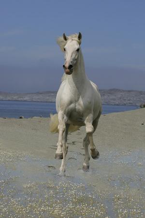 https://imgc.artprintimages.com/img/print/fantasy-horses-02_u-l-q10pcyg0.jpg?p=0