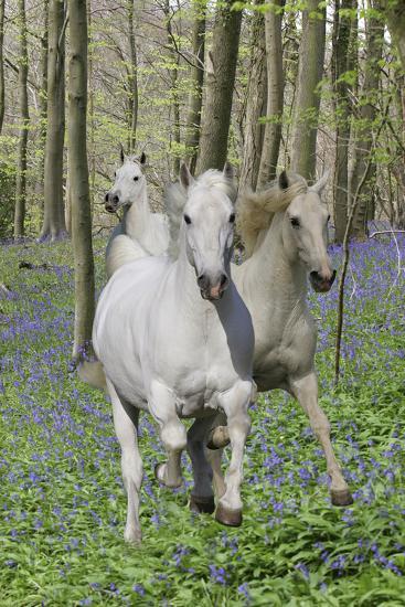 Fantasy Horses 06-Bob Langrish-Photographic Print