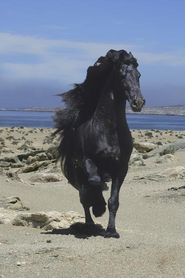 Fantasy Horses 08-Bob Langrish-Photographic Print