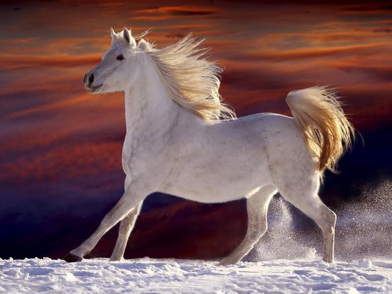 Fantasy Horses 17-Bob Langrish-Photographic Print