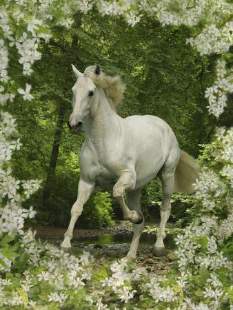 https://imgc.artprintimages.com/img/print/fantasy-horses-23_u-l-q10pc930.jpg?p=0