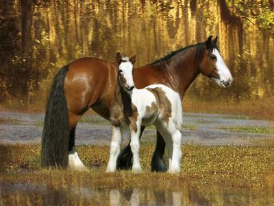 https://imgc.artprintimages.com/img/print/fantasy-horses-26_u-l-q10pcch0.jpg?p=0