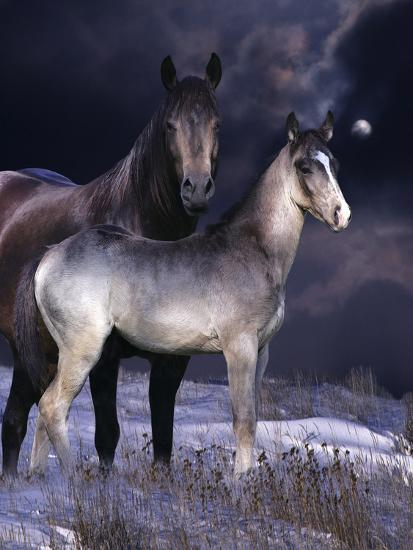 Fantasy Horses 27-Bob Langrish-Photographic Print