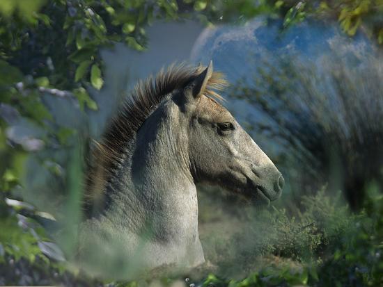 Fantasy Horses 30-Bob Langrish-Photographic Print