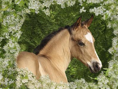 https://imgc.artprintimages.com/img/print/fantasy-horses-31_u-l-q10pca90.jpg?p=0