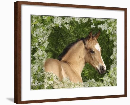 Fantasy Horses 31-Bob Langrish-Framed Photographic Print