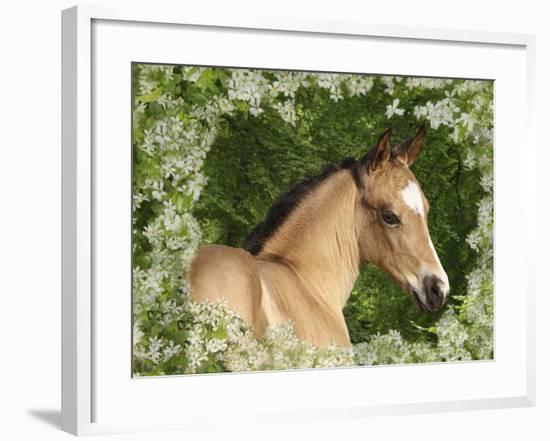 Fantasy Horses 31-Bob Langrish-Framed Photographic Print