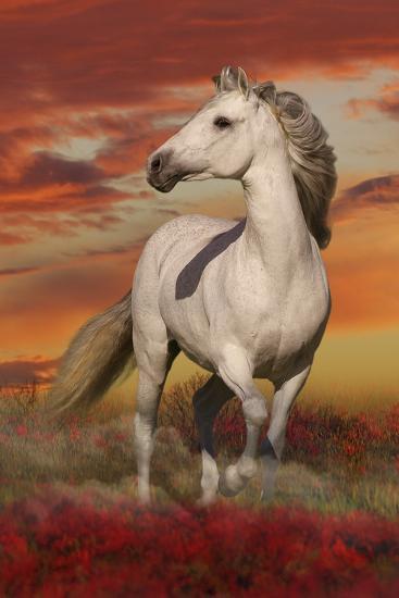Fantasy Horses 38-Bob Langrish-Photographic Print
