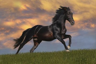https://imgc.artprintimages.com/img/print/fantasy-horses-40_u-l-q10pee20.jpg?p=0