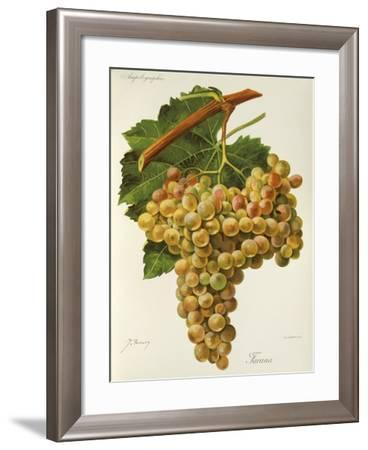 Farana Grape-J. Troncy-Framed Giclee Print