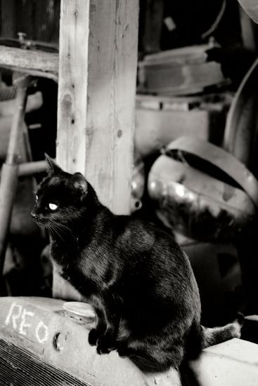 Farm Cat-Erin Berzel-Photographic Print