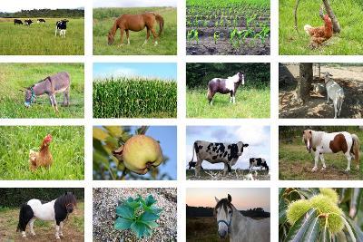 Farm Collage- miff32-Art Print