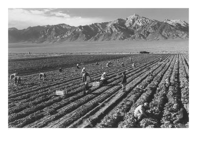https://imgc.artprintimages.com/img/print/farm-farm-workers-mt-williamson-in-background_u-l-pgjkc20.jpg?p=0