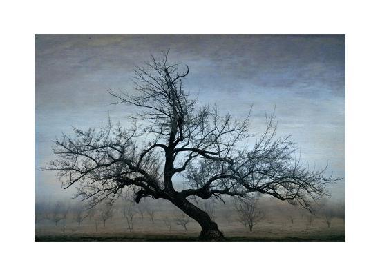 Farm House Tree-David Winston-Giclee Print