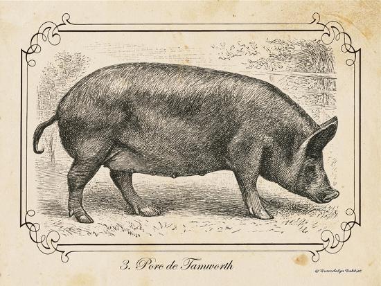 Farm Pig I-Gwendolyn Babbitt-Art Print