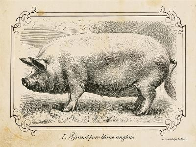 Farm Pig II-Gwendolyn Babbitt-Art Print