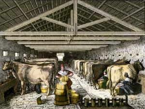 Farm Women Pouring Milk Into a Churn in Dairy Barn