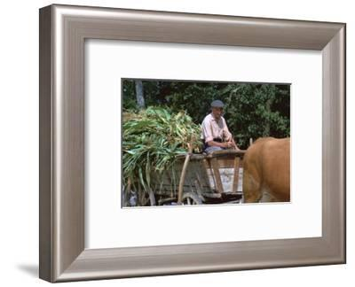 Farmer and his cart in Hungary. Artist: CM Dixon Artist: Unknown-CM Dixon-Framed Photographic Print
