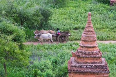 Farmer Driving an Ox-Cart, Bagan, Mandalay Region, Myanmar-Keren Su-Photographic Print