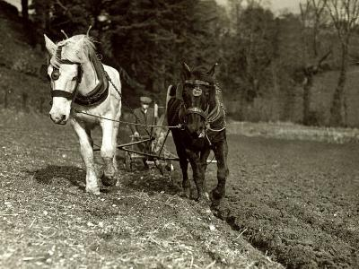 Farmer Ploughing His Field with Horses--Photographic Print
