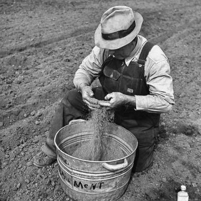 Farmer Straining Grain Through His Fingers-Bernard Hoffman-Photographic Print