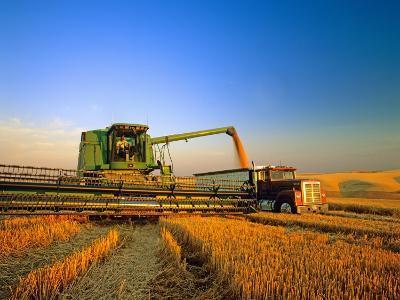 Farmer Unloading Wheat from Combine Near Colfax, Washington, USA-Chuck Haney-Photographic Print