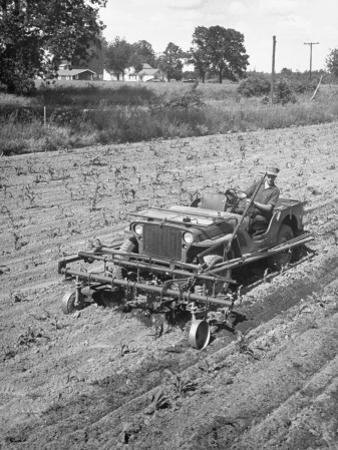 Farmer Using Jeep as a Cultivator in Demonstration of Postwar Uses for Military Vehicles