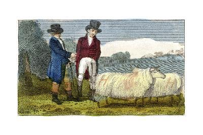 Farmers Discussing Dishley (New Leiceste) Sheep, 1822--Giclee Print