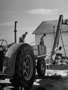 Farmers Storing their Grain