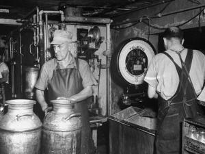 Farmers Working in Dairy Barn