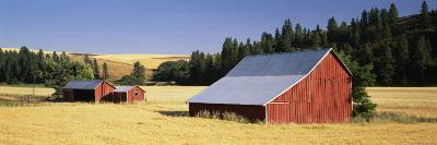 Farmhouses in a Wheat Field, Washington, USA--Photographic Print