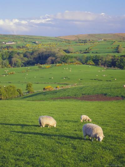 Farming Countryside, County Antrim, Northern Ireland-Gavin Hellier-Photographic Print
