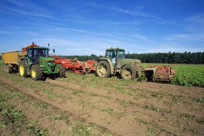 Farming Harvesting Potatoes--Photographic Print