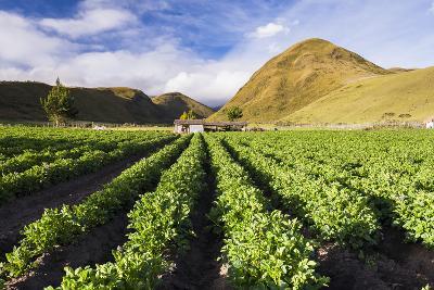 Farmland at the Base of Illiniza Norte Volcano, Pichincha Province, Ecuador, South America-Matthew Williams-Ellis-Photographic Print