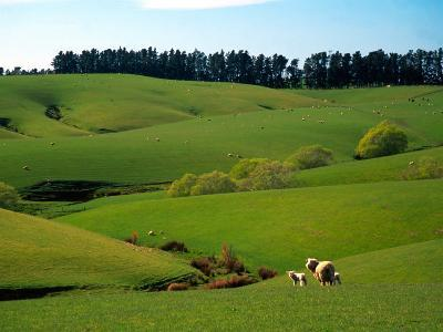 Farmland Near Clinton, New Zealand-David Wall-Photographic Print