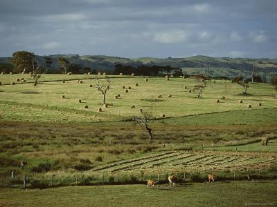 Farmland Near Willunga, Fleurieu Peninsula, South of Adelaide, South Australia, Australia, Pacific-Robert Francis-Photographic Print