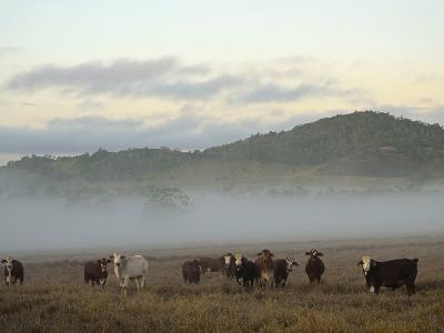 Farmland on Foggy Morning, Atherton Tableland, Queensland, Australia, Pacific-Jochen Schlenker-Photographic Print