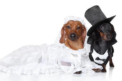 Fashionable Dachshund Dog Wedding-Jagodka-Photographic Print