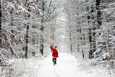 Father Christmas Riding Bicycle Through Beech--Photographic Print