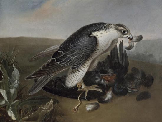Faucon dévorant un oiseau.-Nicasius Bernaerts-Giclee Print