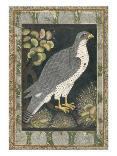 Faucon--Giclee Print