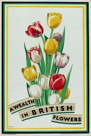A Wealth in British Flowers, from the Series 'British Bulbs for Home Gardens'